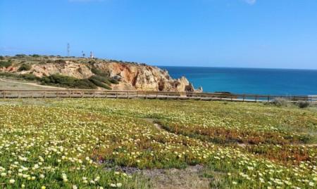 Algarve Blumenwiese