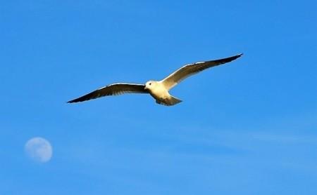 Vogel in Freiheit